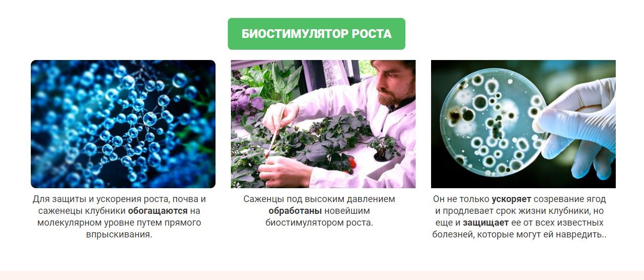 Домашняя ягодница – биостимулятор