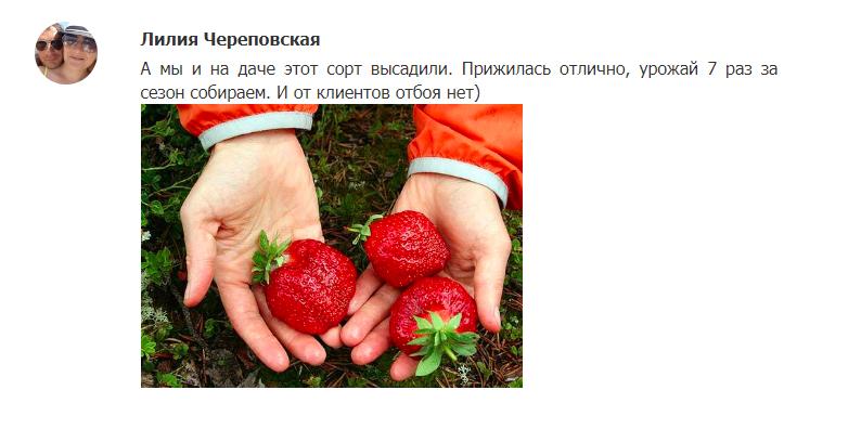 Домашняя ягодница – отзыв