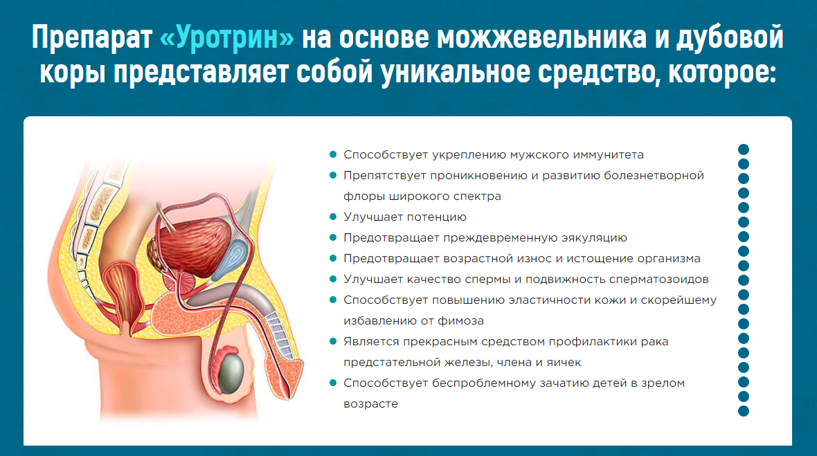 Уротрин – механизм действия